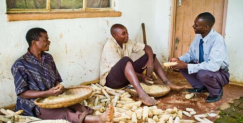 Farmers husking maize in Malawi