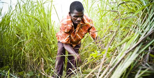 Andrew Likowa chops grass he will use as a natural fertilizer
