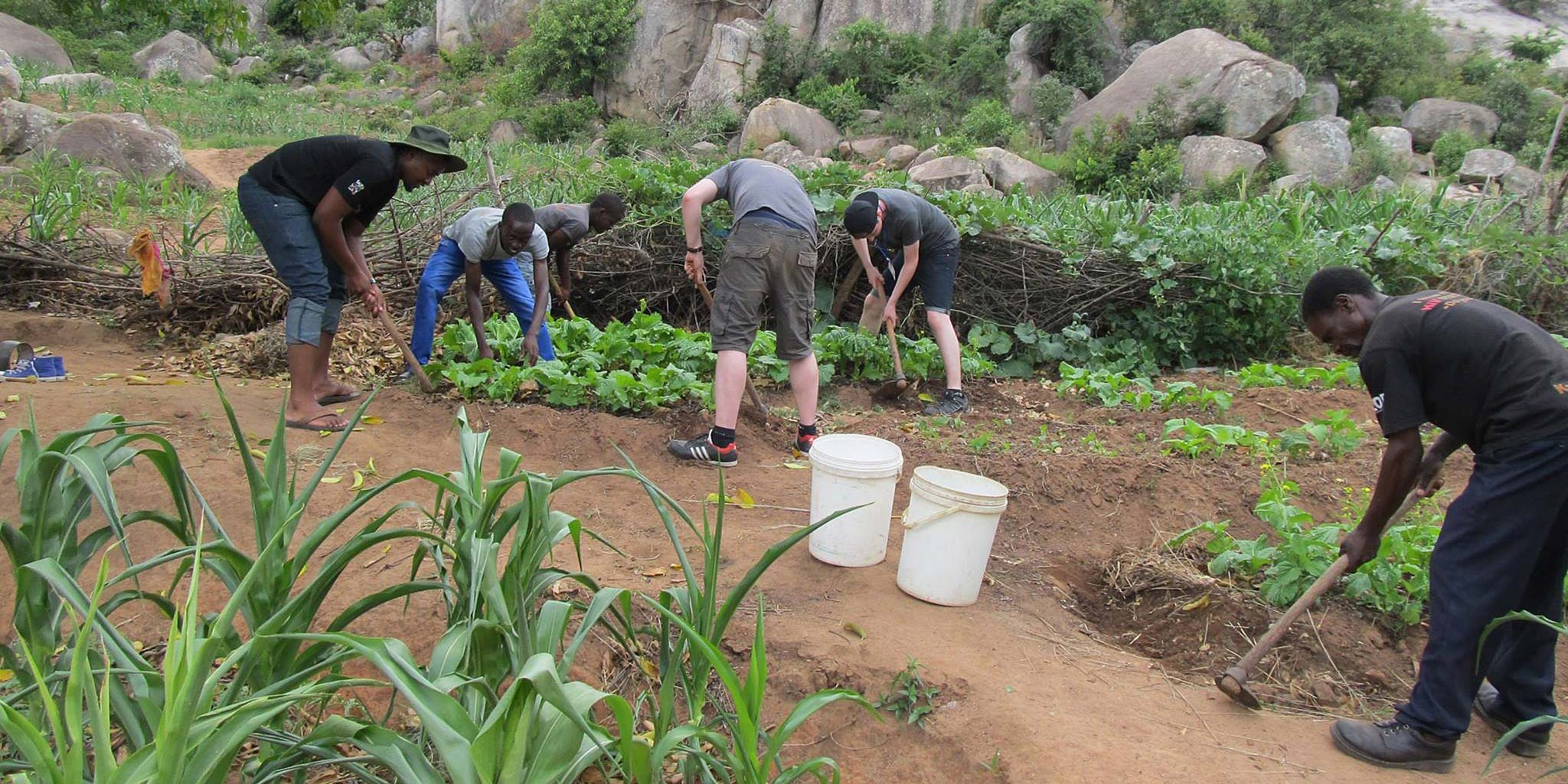 Weeding the maize field during the session