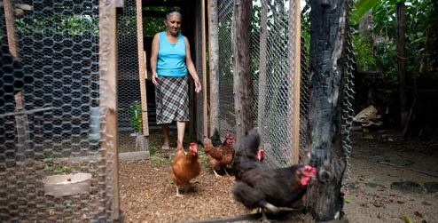 Milagros in her chicken coop