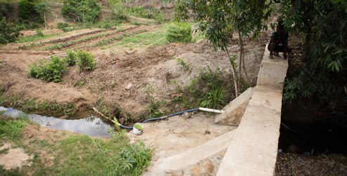 Flood wall beside food garden