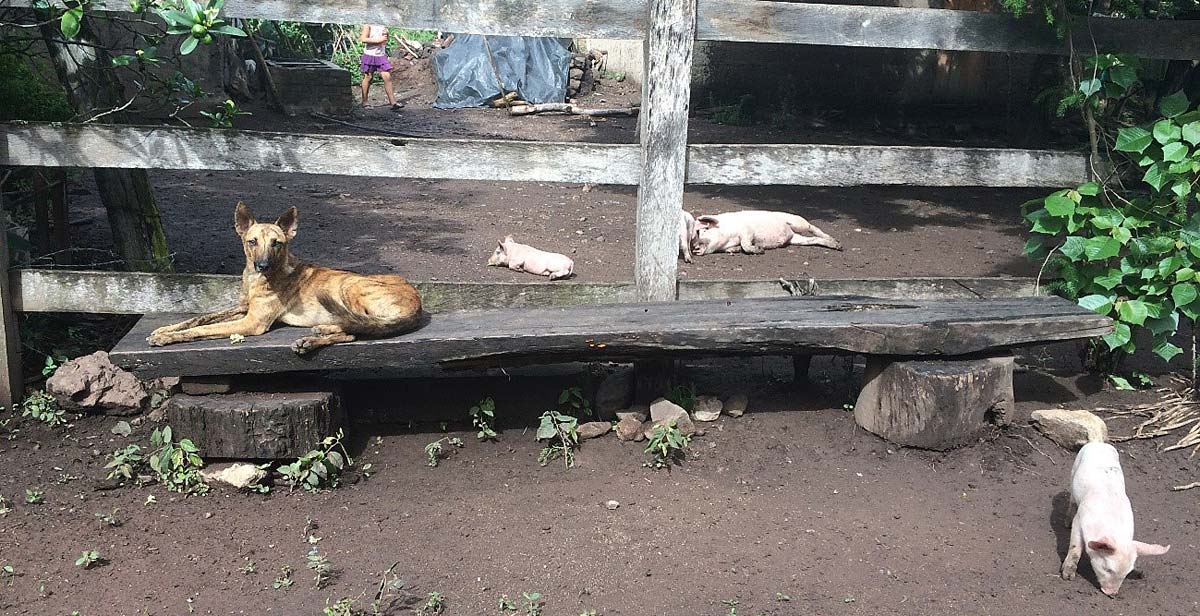 Family's dog and piglet