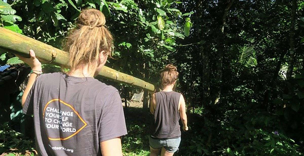 Cortando y jalando el bambú