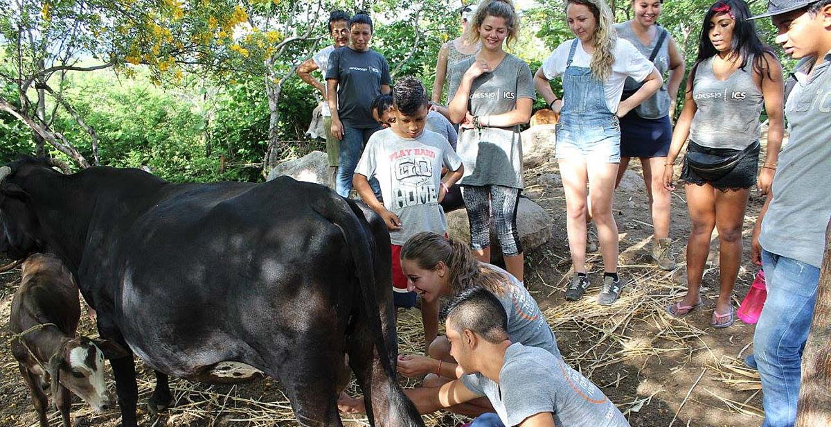 Volunteers learning to milk a cow