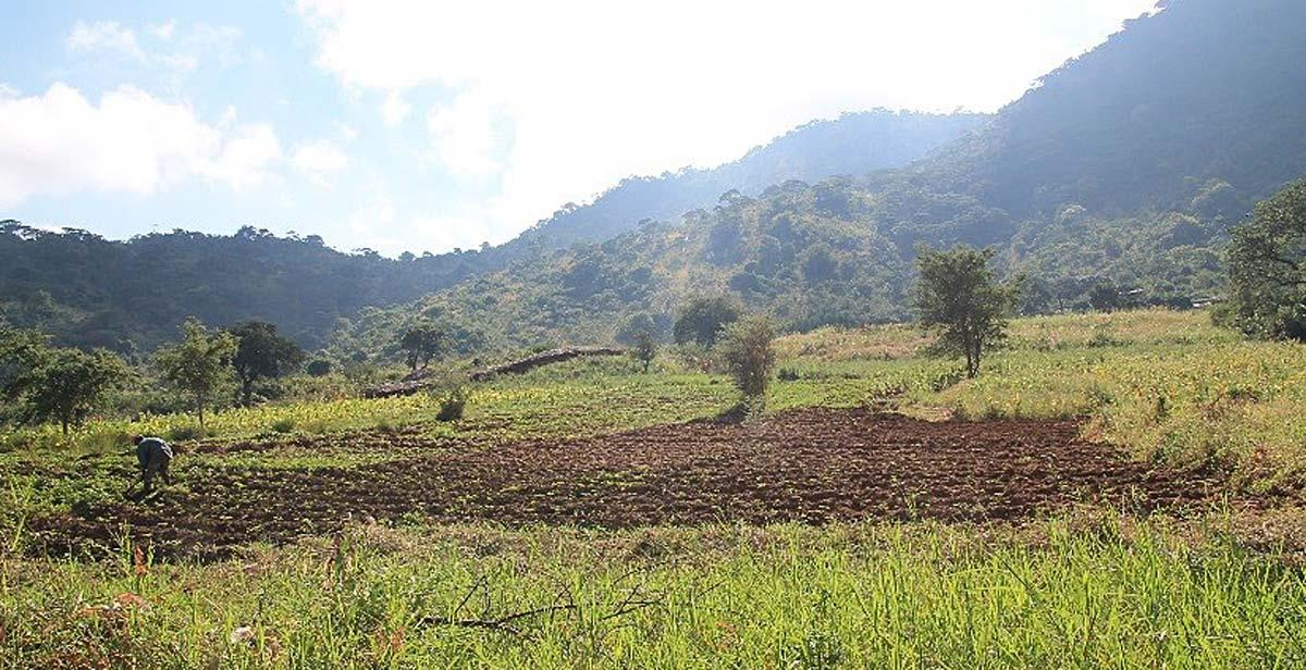 Fields in Kavizombo village