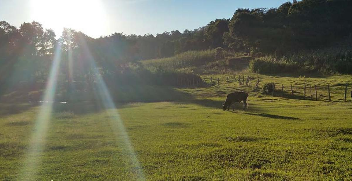 Our El Carrizal football field which we share with the cows. Photo by Junaina Pirbhai