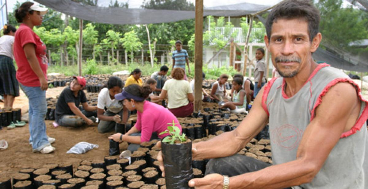 Honduras. Local villager holding potted fruit plant