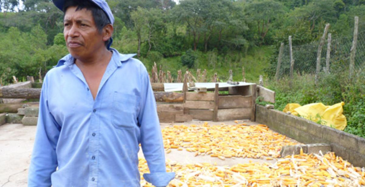 Catalino with his maize crop