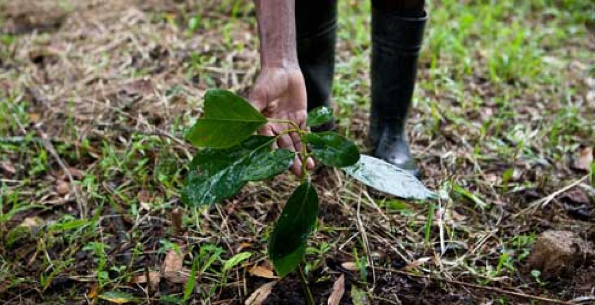 Farmer showing seedling in food garden