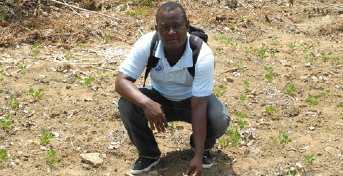 Gabriel Petit-Homme in field of peanut plants, northern Haiti