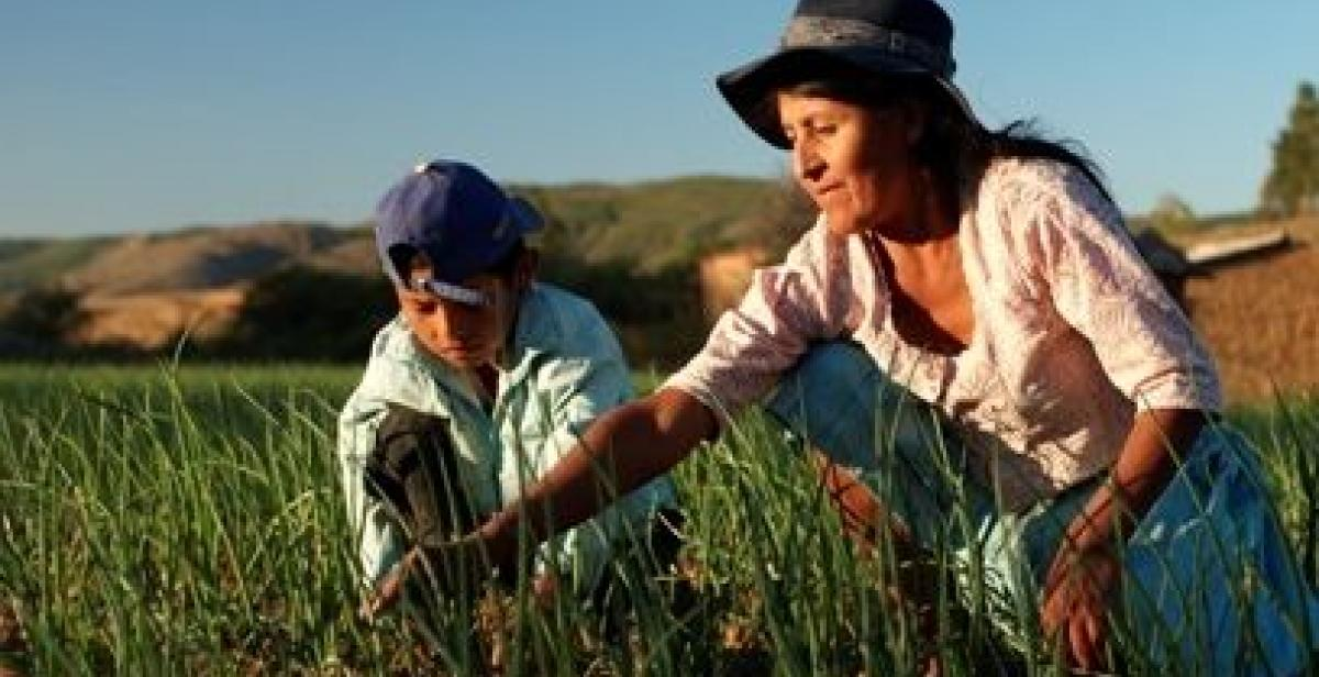 Maria Yolanda and her son tend their crops, Antioquia, Peru