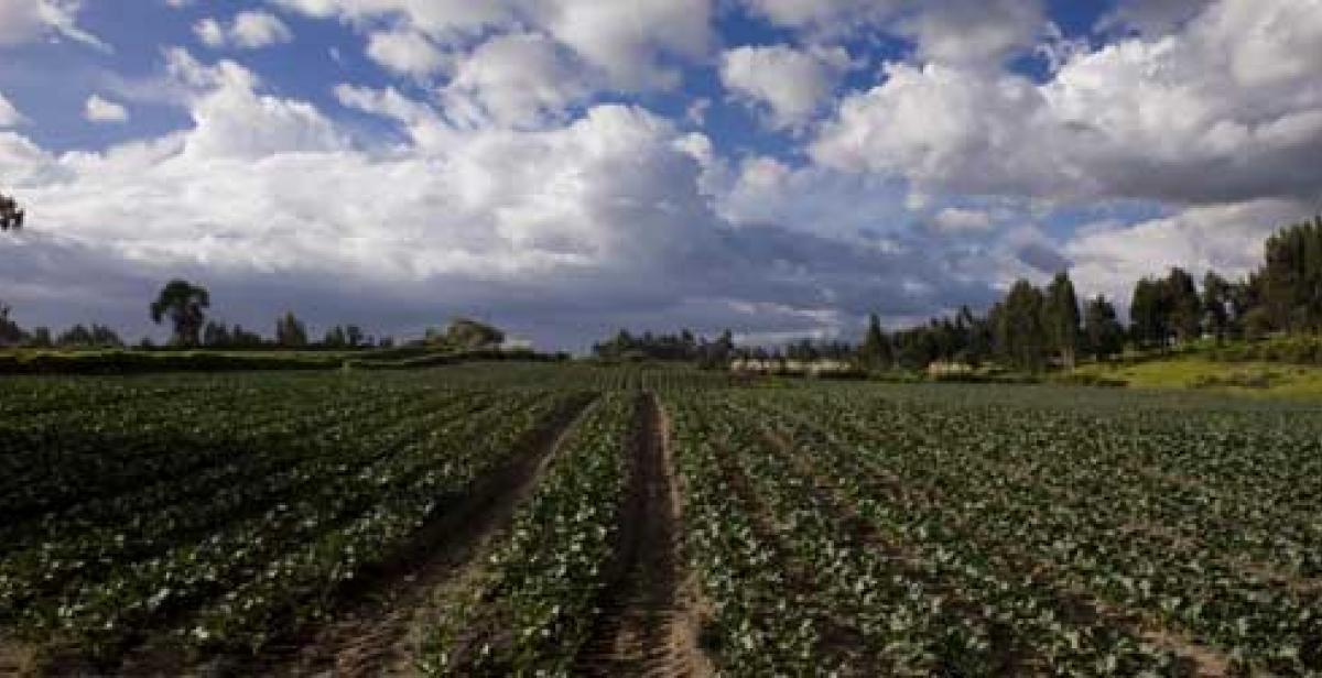 Broccoli plantations in Quito, Ecuador (© Santiago Serrano/Progressio)
