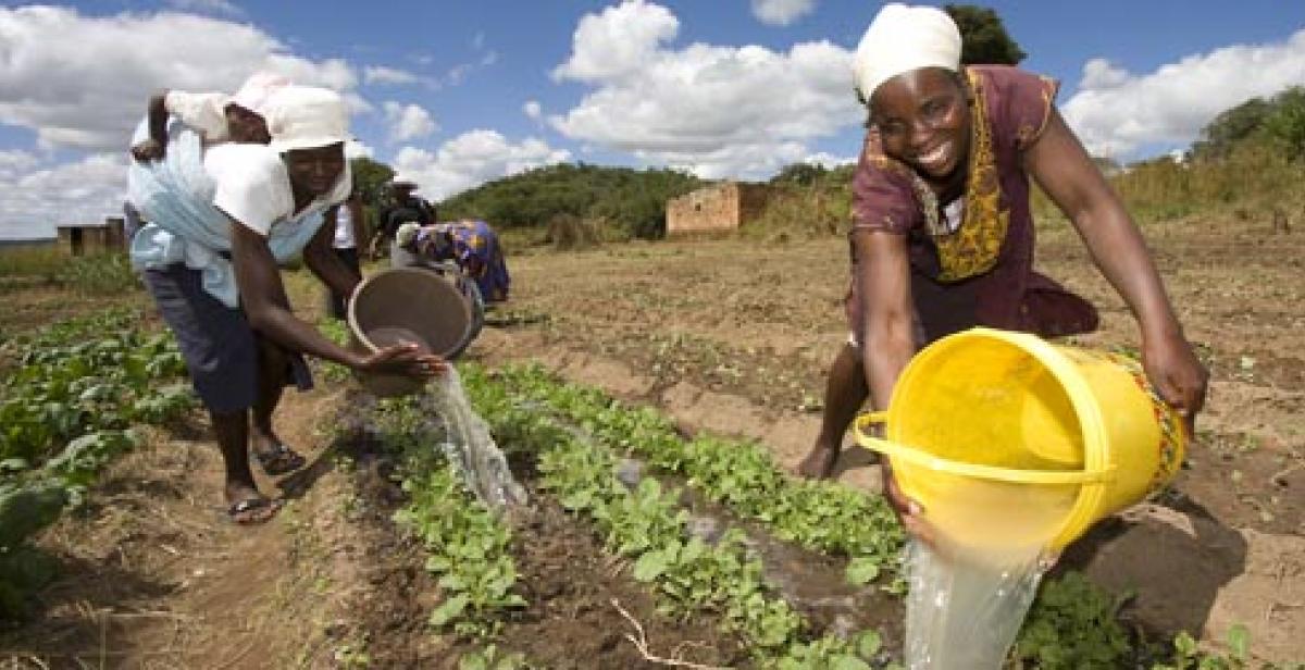 Women in Wedze, Zimbabwe, watering crops