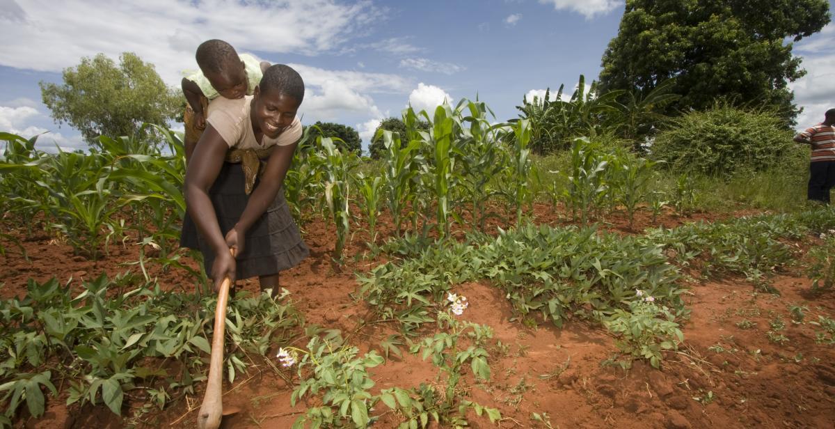 Farmer tilling crops, Zimbabwe