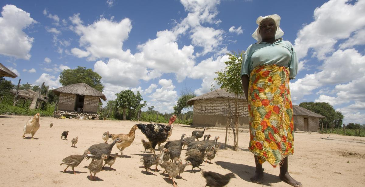 Chicken farmer, Zimbabwe, 2012