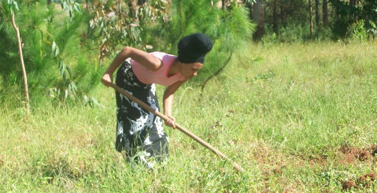 Volunteer clearing weeds around Pina seedlings in Dunduzu, Malawi