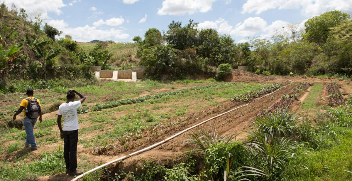 An irrigation pipe crosses a field in Lamine, Haiti