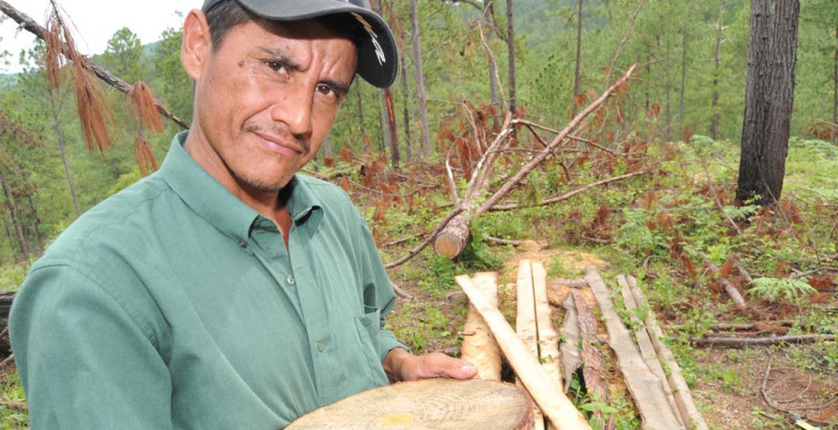 David Amador, an activist against illegal logging in Honduras
