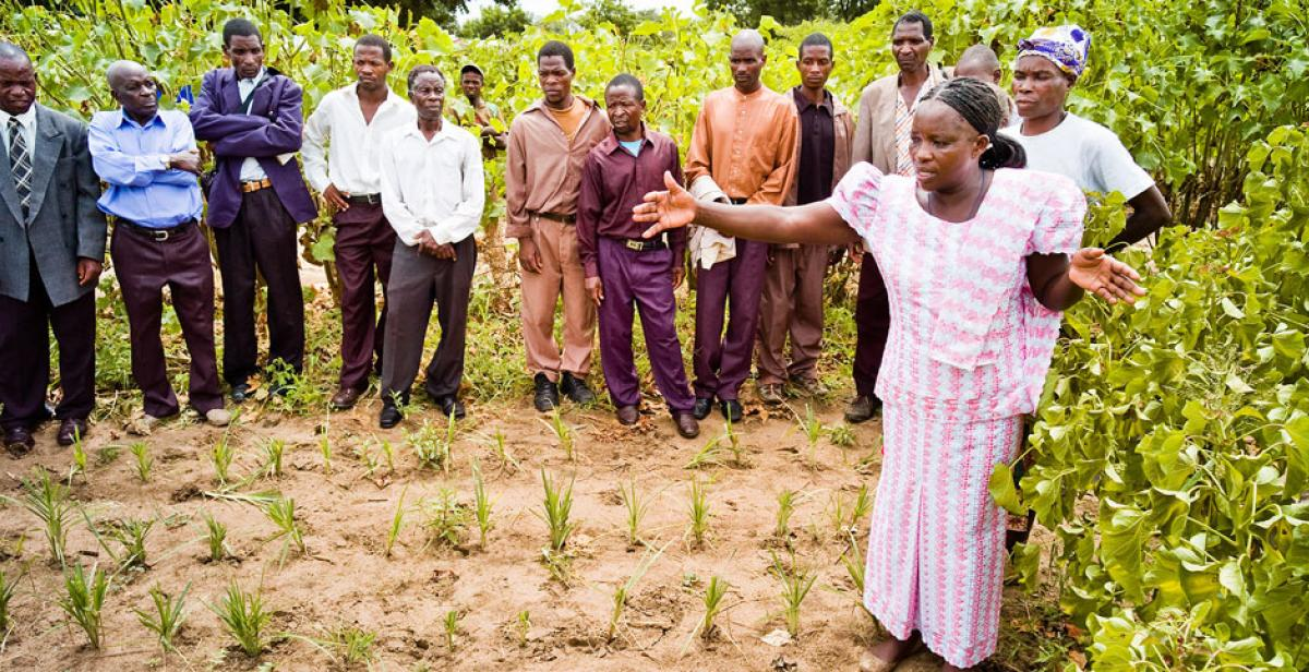 Betty Mkusa showing neighbouring farmers round her fields