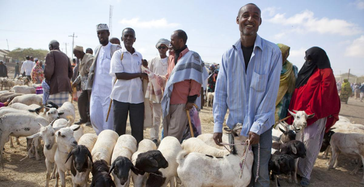 People selling goats at Hargeisa market