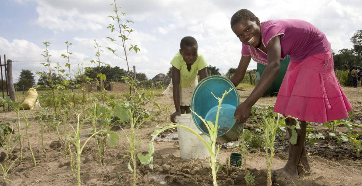 Girls at Kenilworth Junior Farmer Field School in Zimbabwe watering their crops