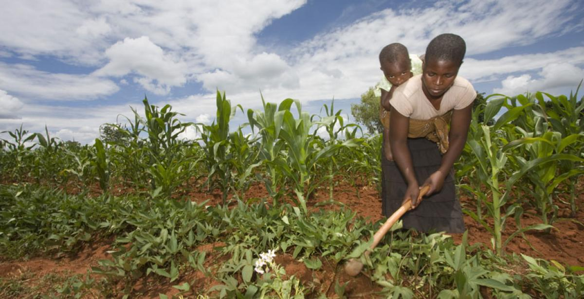 Jane Mudiiwa and her daughter Michelle Garutsa working on her farm