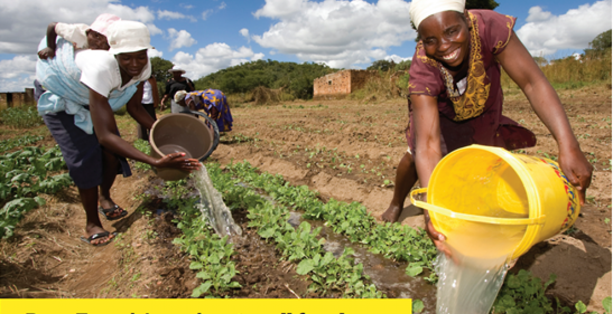 Women farmers irrigating crops with buckets of water in Zimbabwe