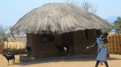 Chembe Town, in the southern region of Malawi, is experiencing severe droughts and farmers are struggling to grow maize.