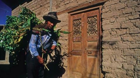 Smallholder farmer near Lima, Peru