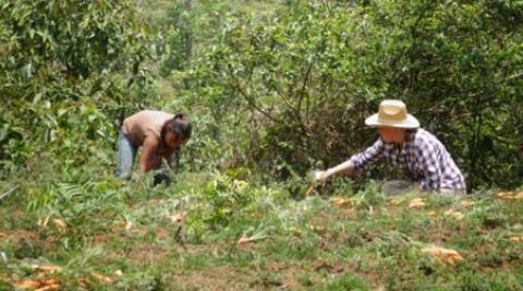 Alba's farm
