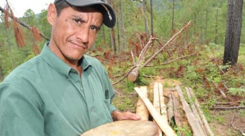 A small scale farmer in Honduras holds a piece of timber