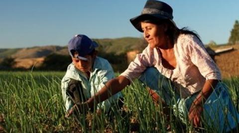 Maria Yolanda and her son tend their crops, Antioquia, Peru