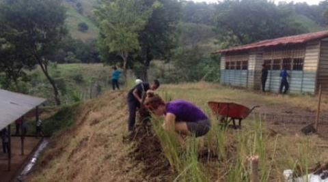 International and national ICS volunteers planting lemongrass (©Progressio)