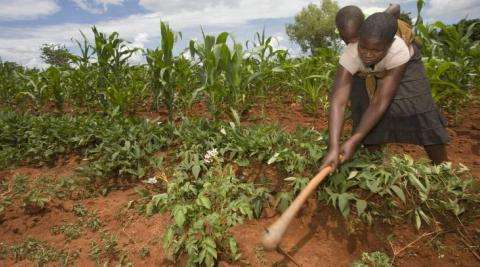 Jane Mudiiwa demonstrates her farming