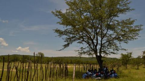 Tyunga tree