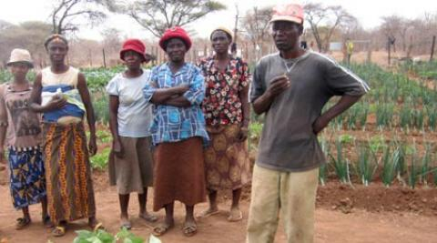 Farmers in community food garden in Zimbabwe