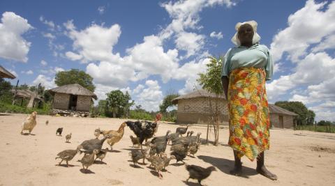 Chicken farmer, Zimbabwe, 2012