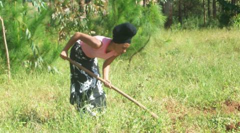 Volunteer clearing weeds around Pina seedlings in Dunduzu, Malawi