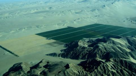 green agricultural fields stretch into the desert
