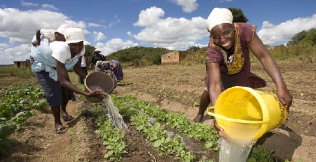 Women farmers in Zimbabwe irrigating a field with buckets of water